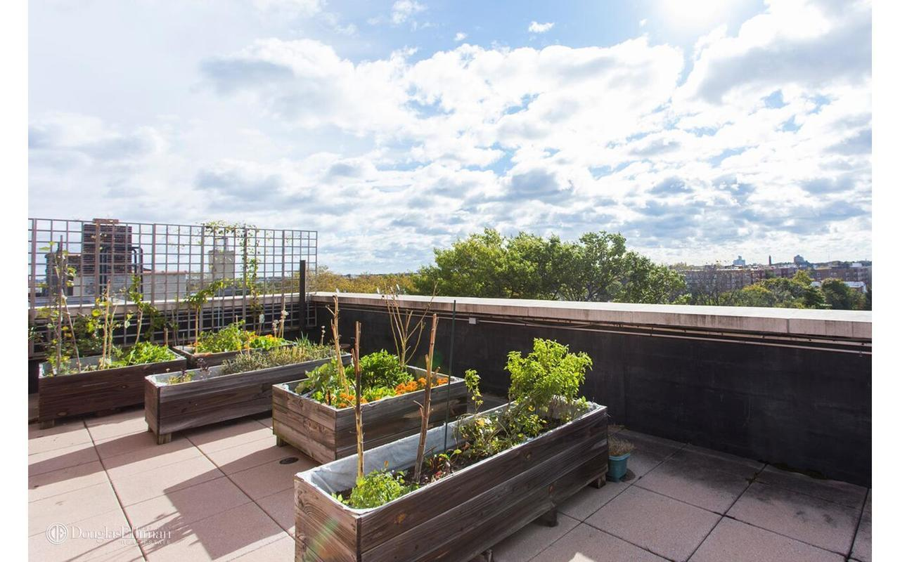 Apartments For Rent In Ditmas Park Brooklyn Ny